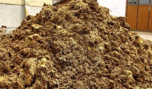 Californians Can Now Pay A Premium To Power Their Homes With Manure 1