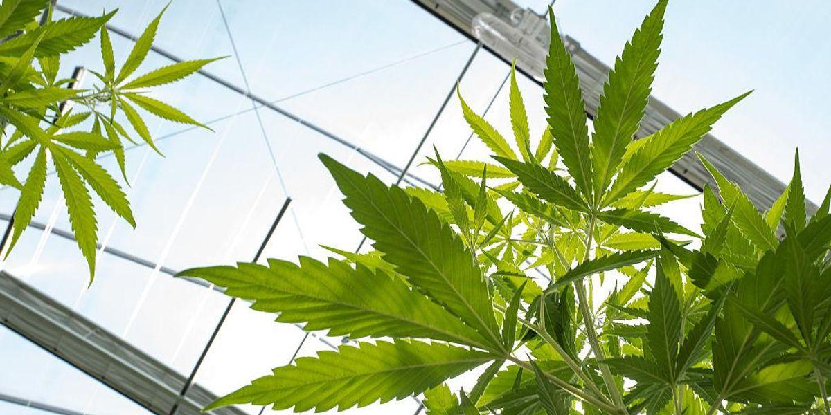 House passes legislation to federally decriminalize marijuana in historic vote 1