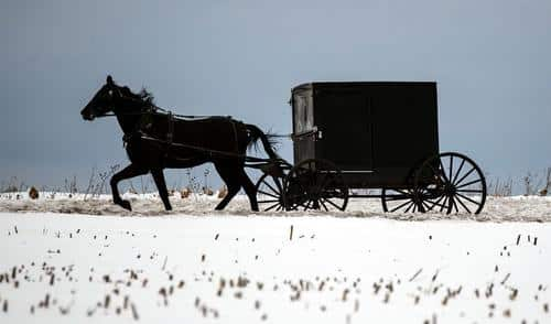 Pennsylvania's Amish Community May Have Already Reached Herd Immunity 1