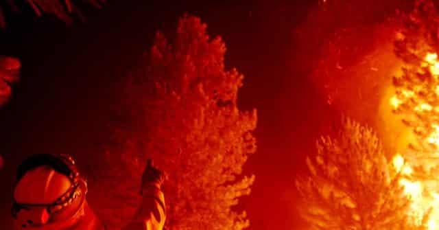 Giant Sequoia Still Smoldering from Last Summer's California Wildfires 1