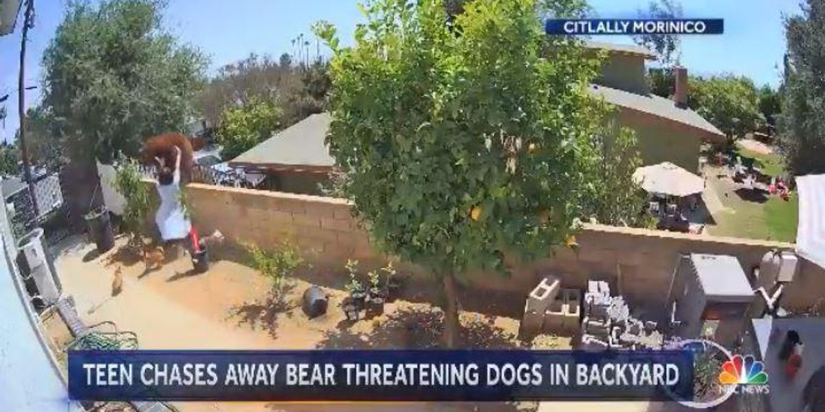 Watch: California teen girl shoves bear off wall with her bare hands as it threatens her dogs 1
