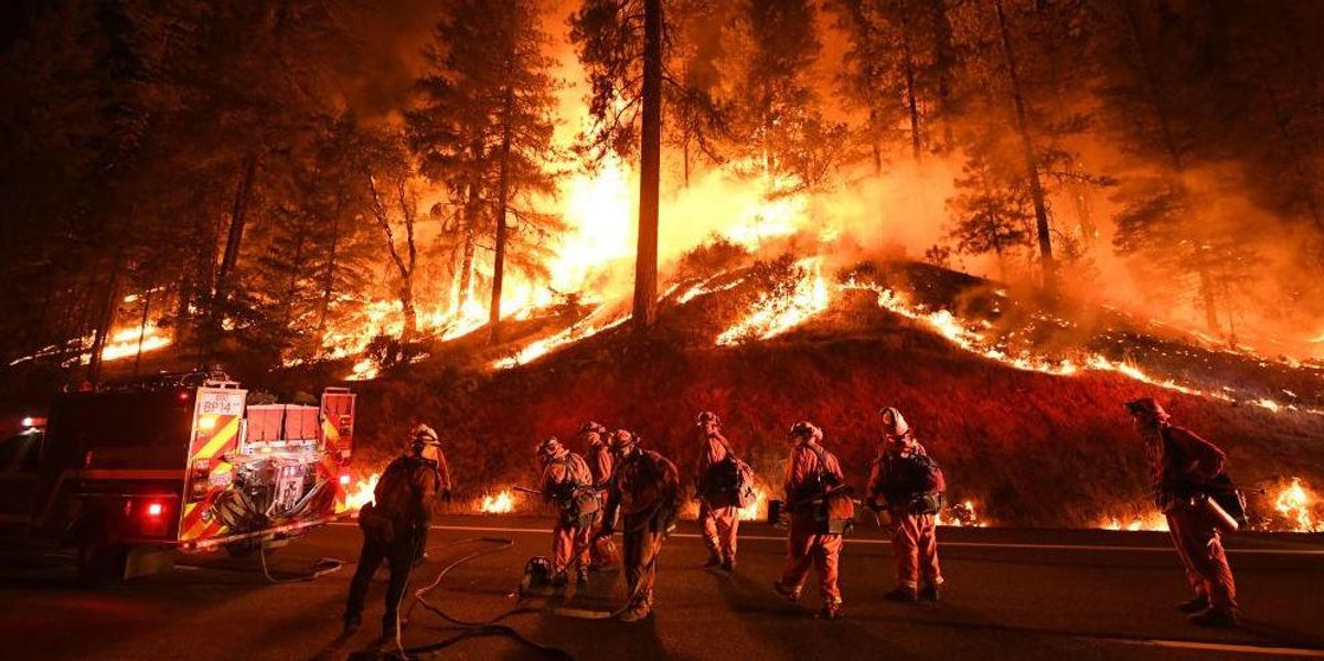 Trump vindicated? California to spend billions to clear out forests, remove wildfire fuel 1