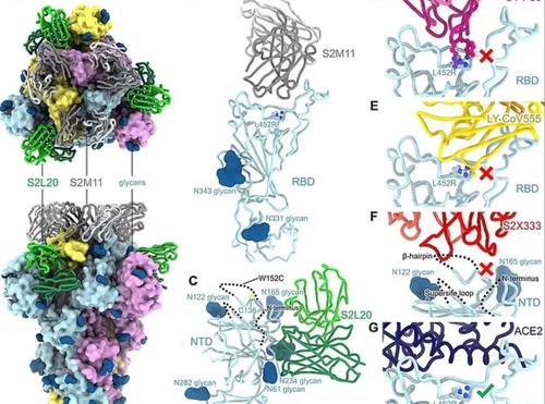 "California Researchers Discover America's First ""Triple"" Mutant COVID Strain 1"